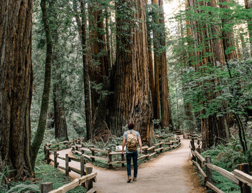 Finding the Pathway To True Wisdom In A Land Of Relativism