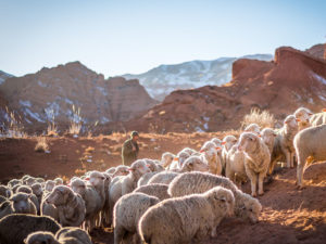 What's the Difference? Shepherding vs. Disciple Making